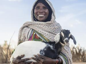 goat, charity gifts