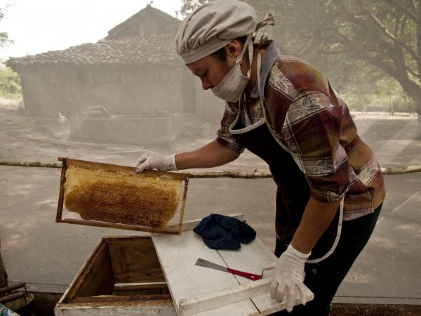 beehive, charity gifts